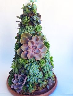 Succulents center piece by Omini Jardim