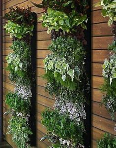 Vertical Garden We love this vertical garden too!