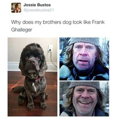 This dog looks like William H. Macy via /r/funny. Best Funny Pictures, Funny Photos, Shameless Memes, Funny Animals, Cute Animals, Funniest Animals, Ian And Mickey, Funny Memes, Hilarious