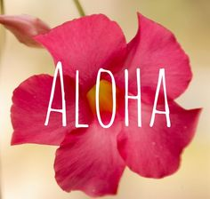 Favorite Vacation:  Hawaii - one of my favorite vacations.