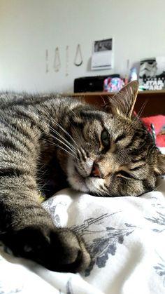 Pretty Cats, Beautiful Cats, Cute Cats, Funny Cats, Fluffy Animals, Animals And Pets, Cute Animals, Cats Tumblr, Human Babies