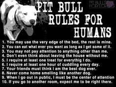 Pit Bull rules for humans- mostly fitting for P5, but she knows better than to beg