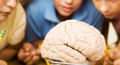 20 Fascinating Facts about your brain   Medicine Forever