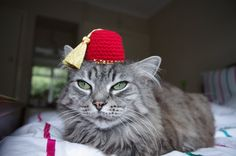 Fez Hat For A Cat. $8.50, via Etsy.