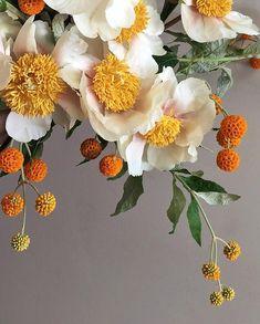 My Flower, Flower Art, Beautiful Flowers, Simply Beautiful, Paper Flowers, Wild Flowers, Deco Floral, Floral Design, Foliage Plants