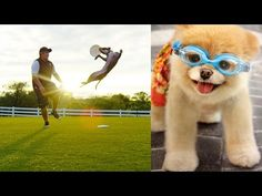World's Most Amazing Dogs in Super Slow Motion! Incredible Dog Challenge...   Devinsupertramp