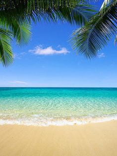 Kate Sea Beach Palm Tree Blue Cloud Background for Photography