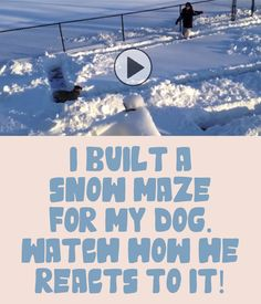 I Built A Snow Maze For My Dog, Watch How He Reacts To It!