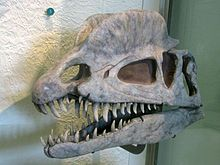 Dilophosaurus (/daɪˌlɒfɵˈsɔrəs/ dy-lof-o-sawr-əs or /daɪˌloʊfɵˈsɔrəs/); is a genus of theropod dinosaur from the Sinemurian stage of the Early Jurassic Period, about 193 million years ago. The first specimens were described in 1954, but it was not until over a decade later that the genus received its current name.
