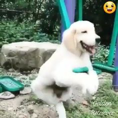 Afternoon in the park ❤ - Tierliebe - Dogs Funny Animal Videos, Cute Funny Animals, Funny Animal Pictures, Cute Baby Animals, Dog Pictures, Funny Dogs, Animals And Pets, Cute Puppies, Cute Dogs