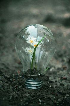 Flower in a lightbulb