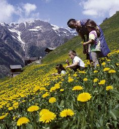 Urlaub in Osttirol - summer in Matrei, East Tyrol-Austria