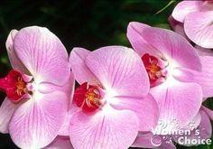 Продавец в цветочном магазине однажды уговорил меня купить янтарную кислоту: мол, это средство удивительно стимулирует рост растений и пере...