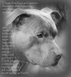 Respect Art Print by Sue Long. All prints are professionally printed, packaged, and shipped within 3 - 4 business days. Choose from multiple sizes and hundreds of frame and mat options. Cute Puppies, Cute Dogs, Dogs And Puppies, Funny Dogs, Doggies, Animals And Pets, Baby Animals, Cute Animals, Dog Quotes