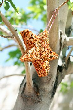Cookie shaped Bird feeders that are great for kids to make. I am going to make some with my grandson.