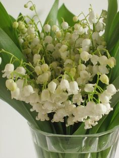 ....love lily of the valley
