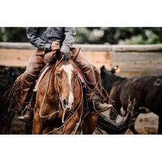 Lisa Dearing Solid-Faced Canvas Print Wall Art Print entitled Cutting Horse, None Cutting Horses, Western Riding, Your Spirit Animal, American Quarter Horse, Funny Cats And Dogs, My Horse, Horse Photography, Beautiful Horses, Pretty Horses