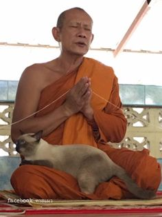 Meditating with the Zen master (the cat is the Zen master)