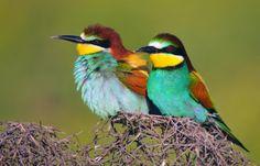 Cute Australian birds :)