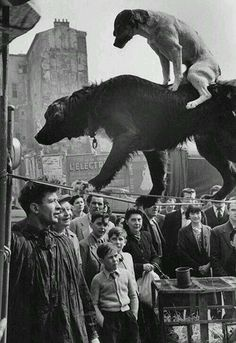 Dog Rides a Dog on a Tightrope; Paris, 1953