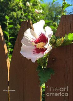 http://fineartamerica.com/featured/the-flower-next-door-marylee-parker.html?newartwork=true Sale# flower #next door