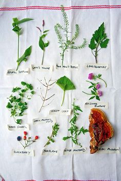 Joys of Foraging~Edible Wild Free Food | Deep Roots at Home