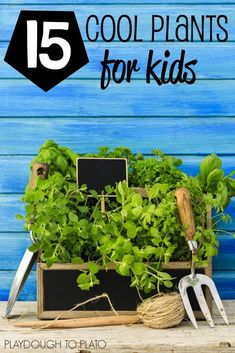 15 Cool Plants for Kids