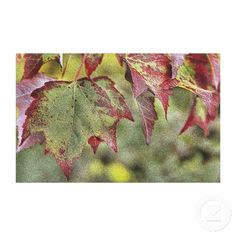 Maple Leaves Canvas Wall Art Print Stretched Canvas Prints