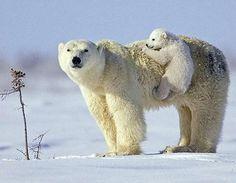 llbwwb:    Giddy up Mom! by Amolife blog.