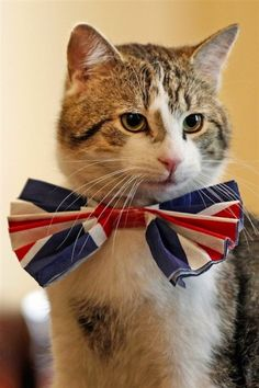 Larry, the 10 Downing Street cat, sits on the cabinet table wearing a British Union Jack bow tie ahead of the Downing Street Royal Wedding street party in London, April 28, 2011.