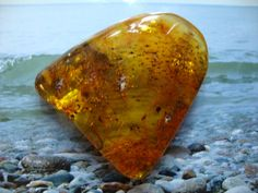 Amber Baltic Honey With Fossil Inclusion