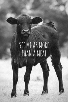 There's no moral difference between the animals, birds, fish, and insects we hunt, those we use for entertainment, those we kill for food and use as commodities, and those we love as members of our families. All animals, birds, fish and insects are sentient and have a right to live. Go vegan and stay vegan for them. It's the least we can do. Start here: www.befairbevegan.com Adopt, spay and neuter your companion animals!