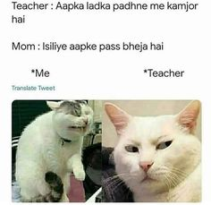 Cat Funny Memes Download – Funny Cat Memes – Download Cat Funny Caption Funny Cat Captions, Funny Cat Memes, Funny Cats, Funny Animals, Instagram Funny, Picture Captions, Funny Animal Pictures, Animal Memes, Good Times