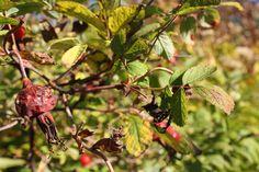 Autumn bushes #photography #art #outside #nature #autumn #fall