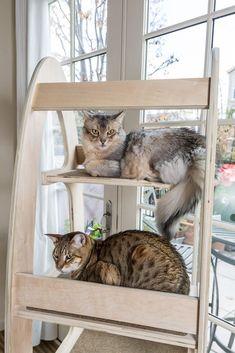 Self Cleaning Automatic Cat Litter Box Australia