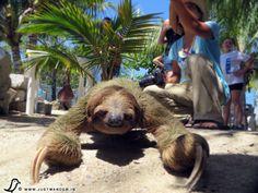PIC: Sloth Encounter, Roatan, Honduras - Excursion from Caribbean Cruise