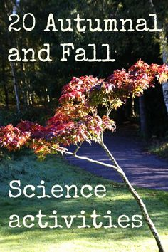 Fall science activities for Preschoolers  for Ruthie Perez!
