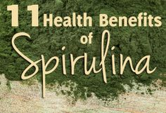 """The Aztecs discovered spirulina, a type of blue-green algae, thousands of years ago and soon made it a staple in their diet. Now days, spirulina is considered a """"superfood."""" The bright green color of spirulina indicates it is full of antioxidants and also contains many elements necessary for a healthy functioning immune system and nervous system. Give it a try!"""
