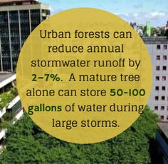 "Source: Fazio, Dr. James R. ""How Trees Can Retain Stormwater Runoff."" Tree City USA Bulletin 55. Arbor Day Foundation. Web.."