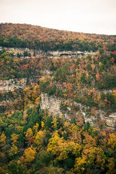Cloudland Canyon in Chattanooga Cumberland Plateau, Tennessee Chattanooga Tennessee, East Tennessee, Tennessee Waltz, Great Places, Places To See, Beautiful World, Beautiful Places, Cumberland Plateau, Cloudland Canyon