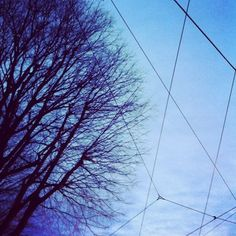 Looking up: bare trees and wires.