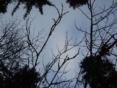 If Branches were Bones... by fatcatbeatrice.deviantart.com on @deviantART
