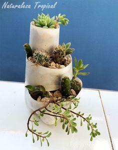 Mini-jardín de suculentas terminado