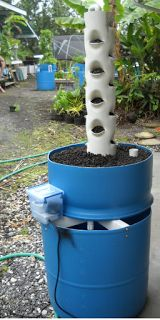 Chico Aquaponic: Idea for Vertical Gardening