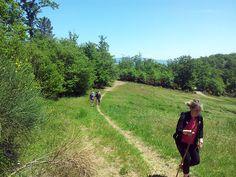 How did you choose to spend your day off? We chose to take a walk in the woods .... have a good Sunday!  Come avete scelto di passare la vostra giornata di riposo? Noi con una passeggiata nel bosco....buona domenica!