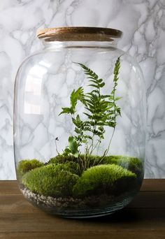 Bottle Terrarium, Moss Terrarium, Terrarium Plants, Bottle Garden, Ecosystem In A Bottle, Succulents Garden, Planting Flowers, Garden Plants, Indoor Garden