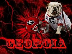 Bulldogs Football, Cute Bulldogs, Georgia Girls, University Of Georgia, Georgia Bulldogs, College Football, Football Helmets, Puppies, English Bulldogs