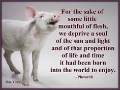 Vegan quote. How sad, and it's all a deadly illusion. Vegan food is much more tasteful.