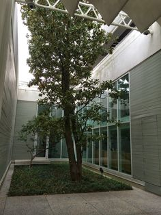 courtyards in renzo piano menil collection - Google Search