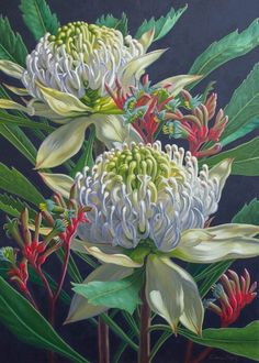Two White Waratahs on Indigo, 2 by Fiona Craig Rare Flowers, Beautiful Flowers, Australian Native Flowers, Australian Wildflowers, Australian Art, Flower Prints, Flower Art, Waratah Flower, Kangaroo Paw